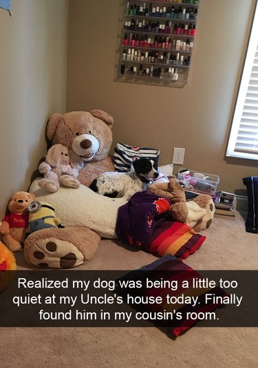 Dog hiding in a bunch of stuffed animals