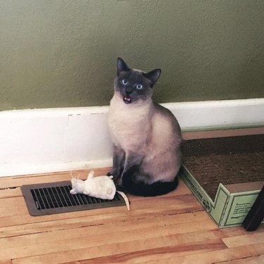 cat with plush toy stands over heating grate