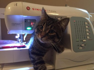 cute cat pops out of sewing machine