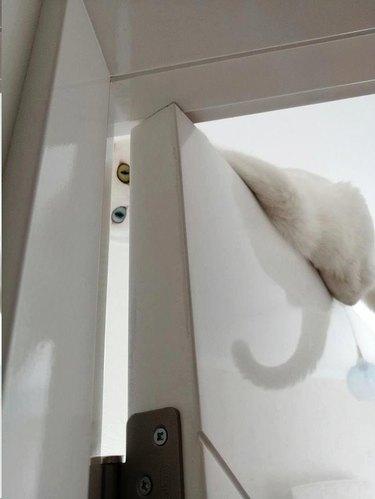 white cat peers down from top of door