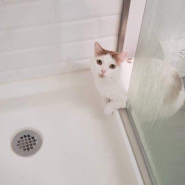 cat investigates shower