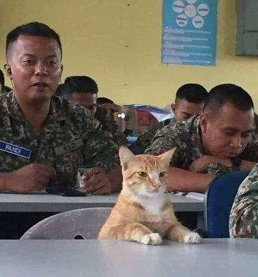 cat sits in class with soldiers