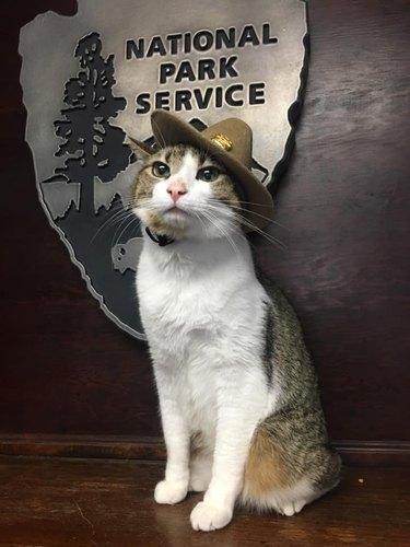 cat in national park service ranger hat