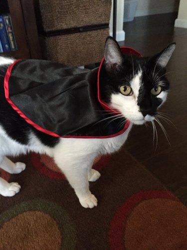 Cat in vampire cape.