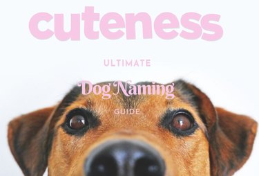 cuteness ultimate dog naming guide