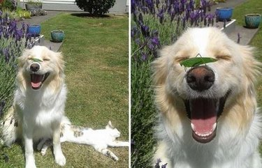 Dog with bug on its nose