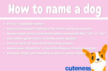 how to name a dog infographic