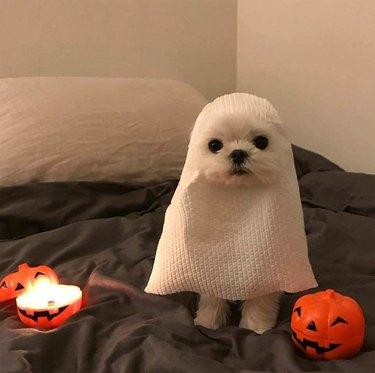 White dog dressed up like a cute ghost