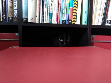 black cat hides in shadow of bookcase