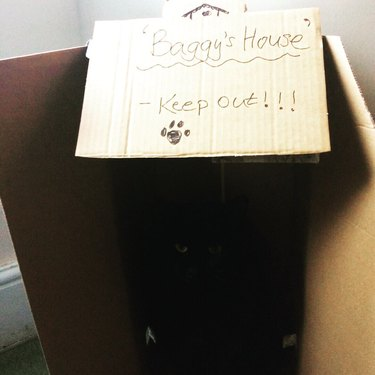 only eyes of black cat sitting in box visible