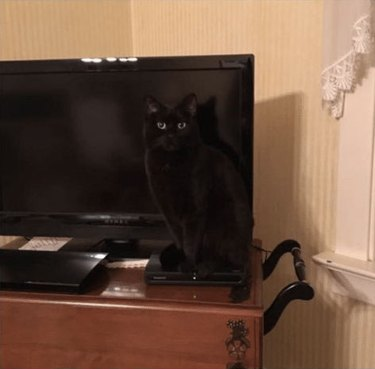 black cats blends into television screen