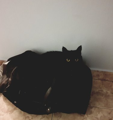 black cat melts into black bean bag