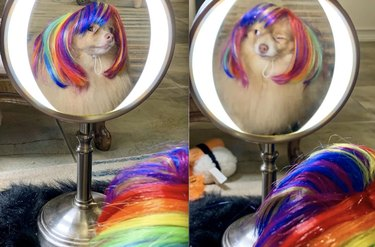 dog winks at reflection in mirror