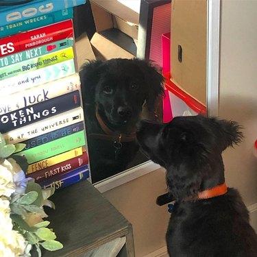 dog unsure about rself-eflection