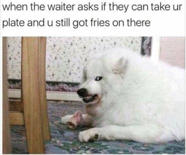 Dog with a bone growling at an intruder