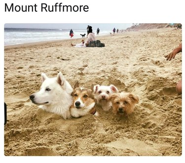 Four dogs buried in the sand
