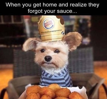 Dog wearing a Burger King crown with chicken nuggets but he still looks sad.