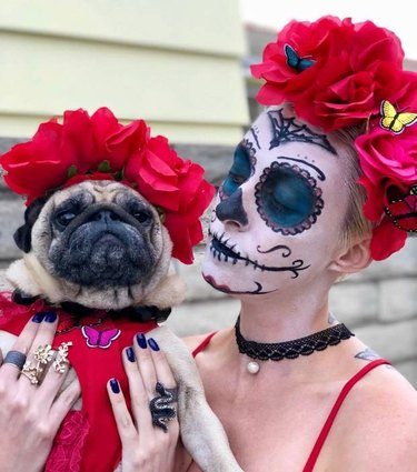 dog dressed in dia de muertos outfit