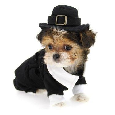 dog dressed as a pilgrim