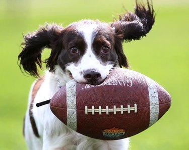 dog with football