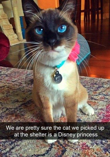Blue-eyed cat