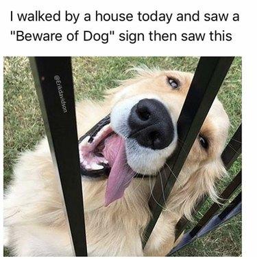 Very friendly dog