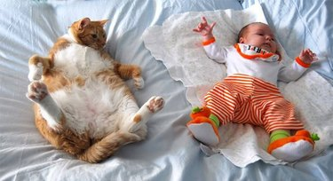 Fat cat and a baby
