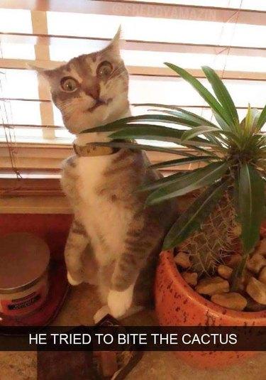 Cat tried to bite cactus