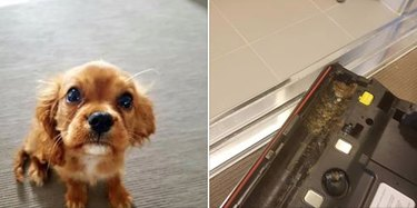 """People are using social media to """"roast"""" their pups and we can't stop LOLing"""