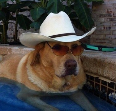 Dog wearing cowboy hat and sunglasses in a swimming pool.