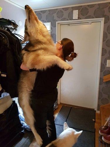Big old dog getting hugs