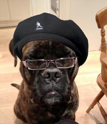 Dog that looks like Samuel L. Jackson wearing a hat.