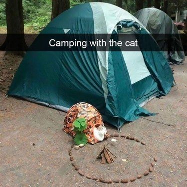 Cat with tent and little campfire