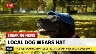 Dog wearing hat.