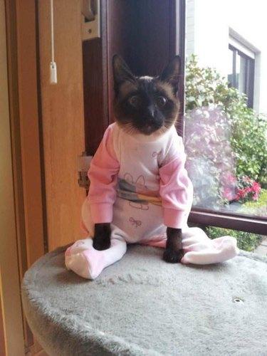 Cat in footie pajamas
