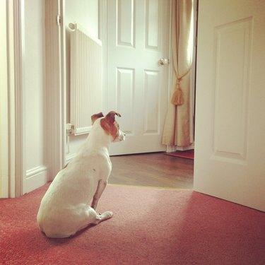 Dog waiting at the door