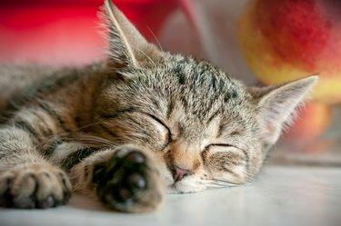 Sleeping kitten - portrait