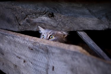 Young cat with frightened gaze hidden behind a fence