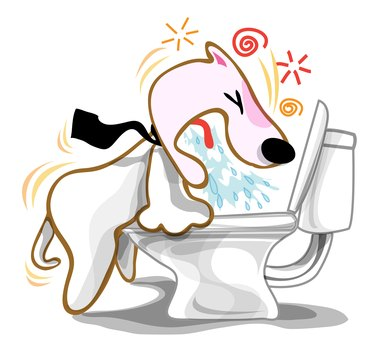 Dog Vomiting in the toilet