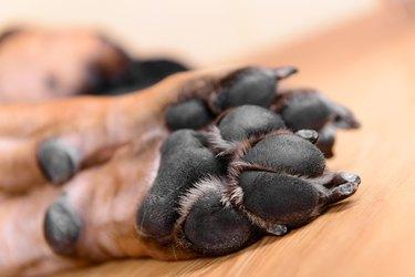 pet dog pads