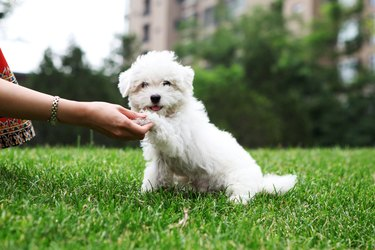 Cute Dog Shaking Hand - XLarge