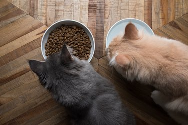 two cats eating food and drinking water