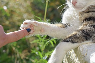 Hand and Paw of Cat like a symbol of friendship between human and pet