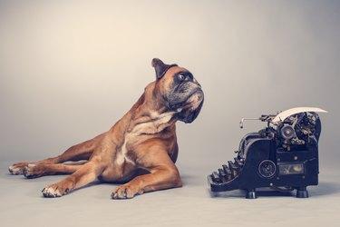 Boxer dog making note