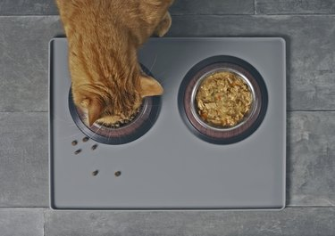 Cat eating dry food beside a food bowl with wet food, seen directly from above.