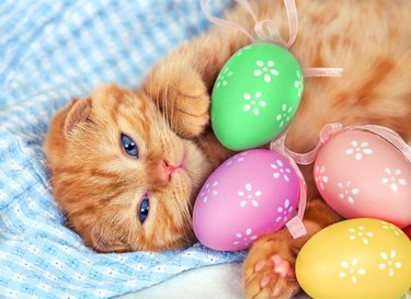 Red kitten with Easter colored eggs