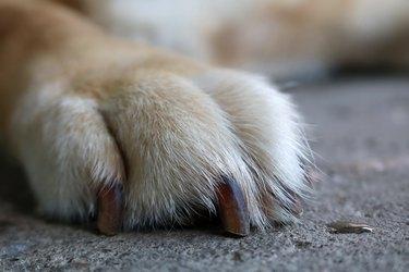 Dog foot on the floor
