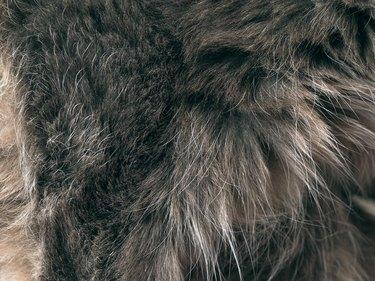 Texture of fur