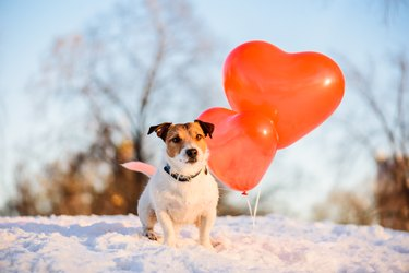Dog in the snow with red heart-shaped balloons
