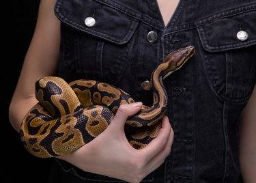 Woman with ball python